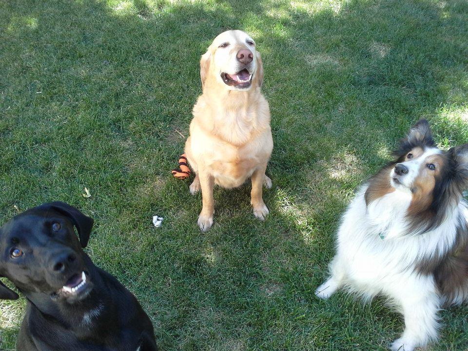 Golden Spike Dog Obedience Club Dog / Handler Training