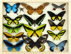 Storybook Science: Incredible Insects