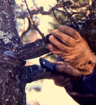 Master Pruner Series: Trees I with UW Botanic Gardens and PlantAmnesty