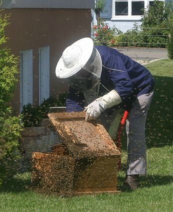 UW Botanic Gardens: Introduction to Beekeeping