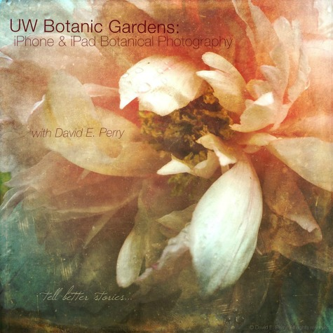 UW Botanic Gardens: iPhone and iPad Botanical Photography
