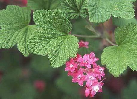 UW Botanic Gardens: Native Splendor in the Garden