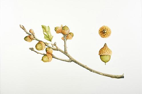 Nature Journal Workshop with botanical artist Regina Gardner Milan