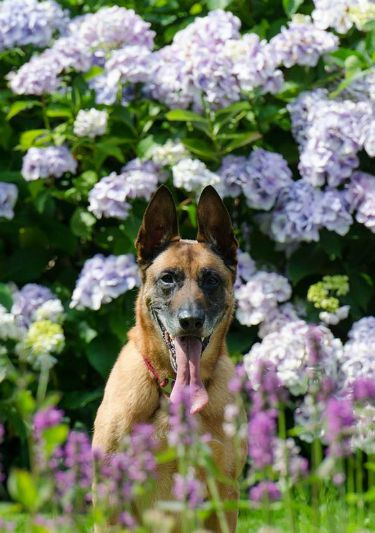 UW Botanic Gardens - Gardening with Dogs