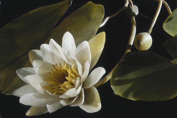 Glass Flowers Soirée