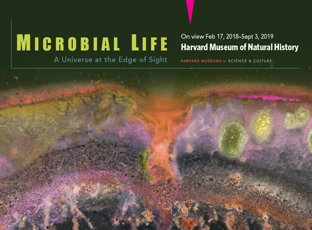 Microbial Life: A Universe at the Edge of Sight