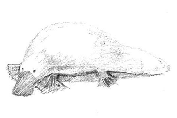 Harvard Student Wintersession Event - Drawing Animals