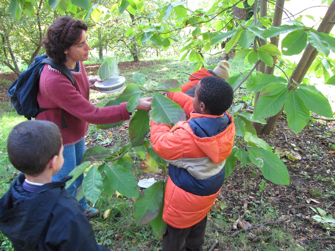 Make a Difference as an Arnold Arboretum Field Study Guide