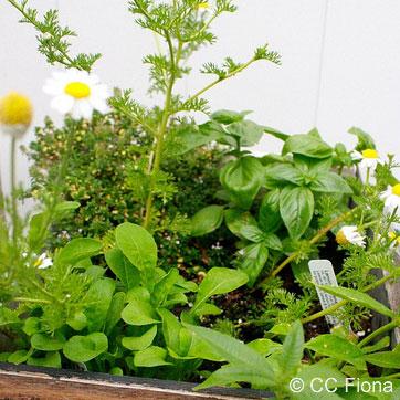 Kids' Paint & Grow Garden Box