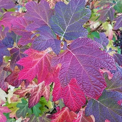 Gardening with the Seasons: Fall (online)