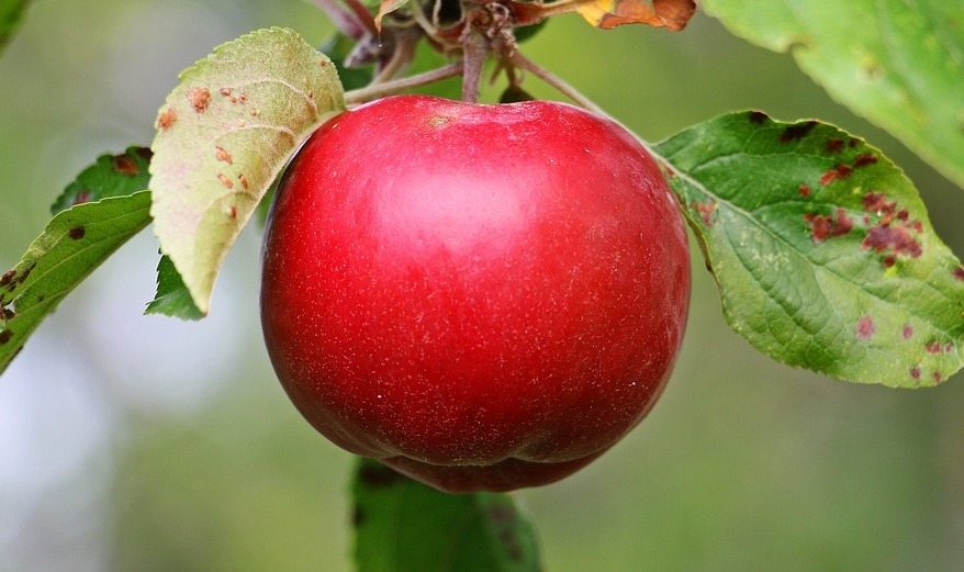 Plant CSI: What's Wrong With My Apple Tree (online)