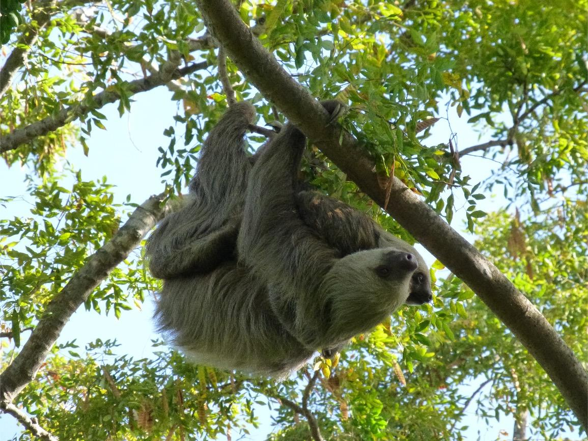 Video Webinar for Families: Natural History at Home - At Home in the Rainforest Canopy
