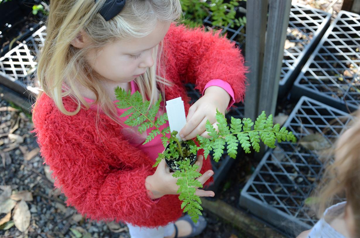 Redland City Event - IndigiScapes Nursery Plant Sales