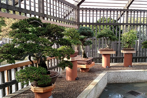 Bonsai Behind the Curtain: Uncovering Their Care and Cultivation