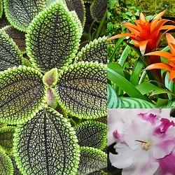 Houseplants 101: The Art of Growing Plants Indoors (online)