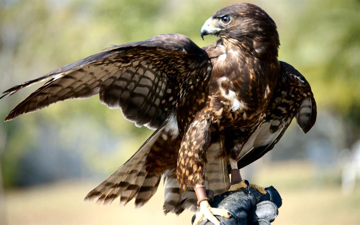 Birds Of Prey Up Close In Boston Ma Apr 20 2017 12 00 Am Eventful