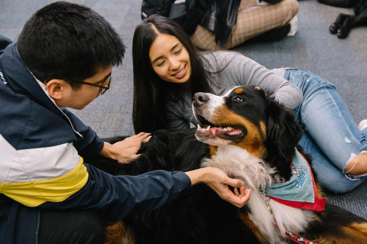 De-Stress with Dogs at the IMA