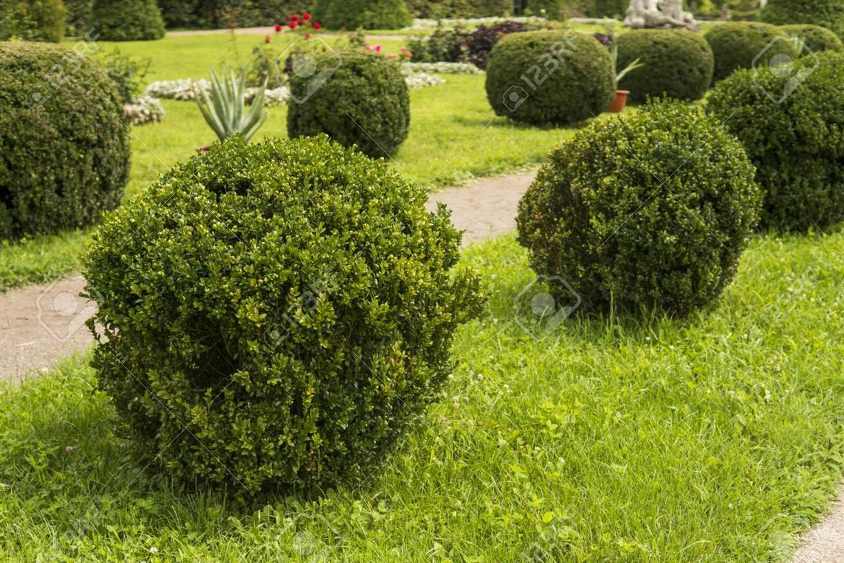 Measure Twice, Cut Once: Introductory Tree and Shrub Pruning