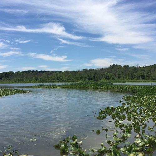 Wild, Wonderful Wetlands