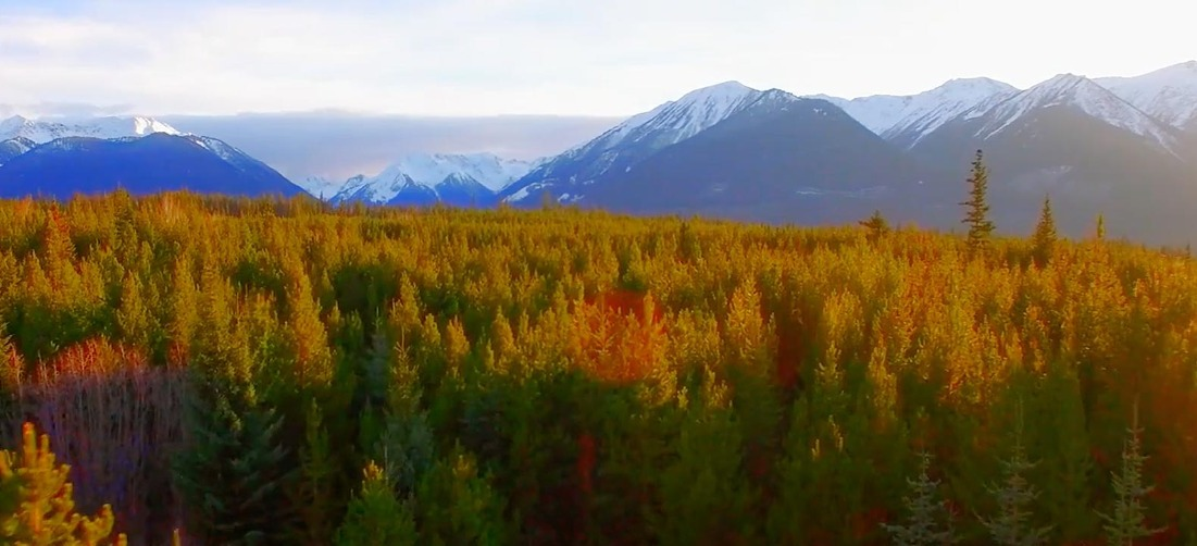 Feedback Loops: Forests