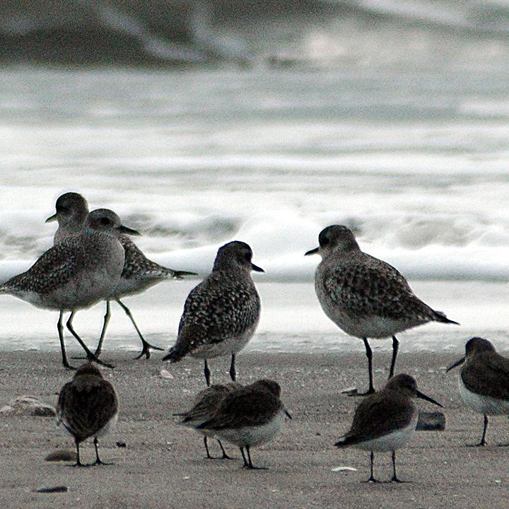 Birds of Bolinas Lagoon