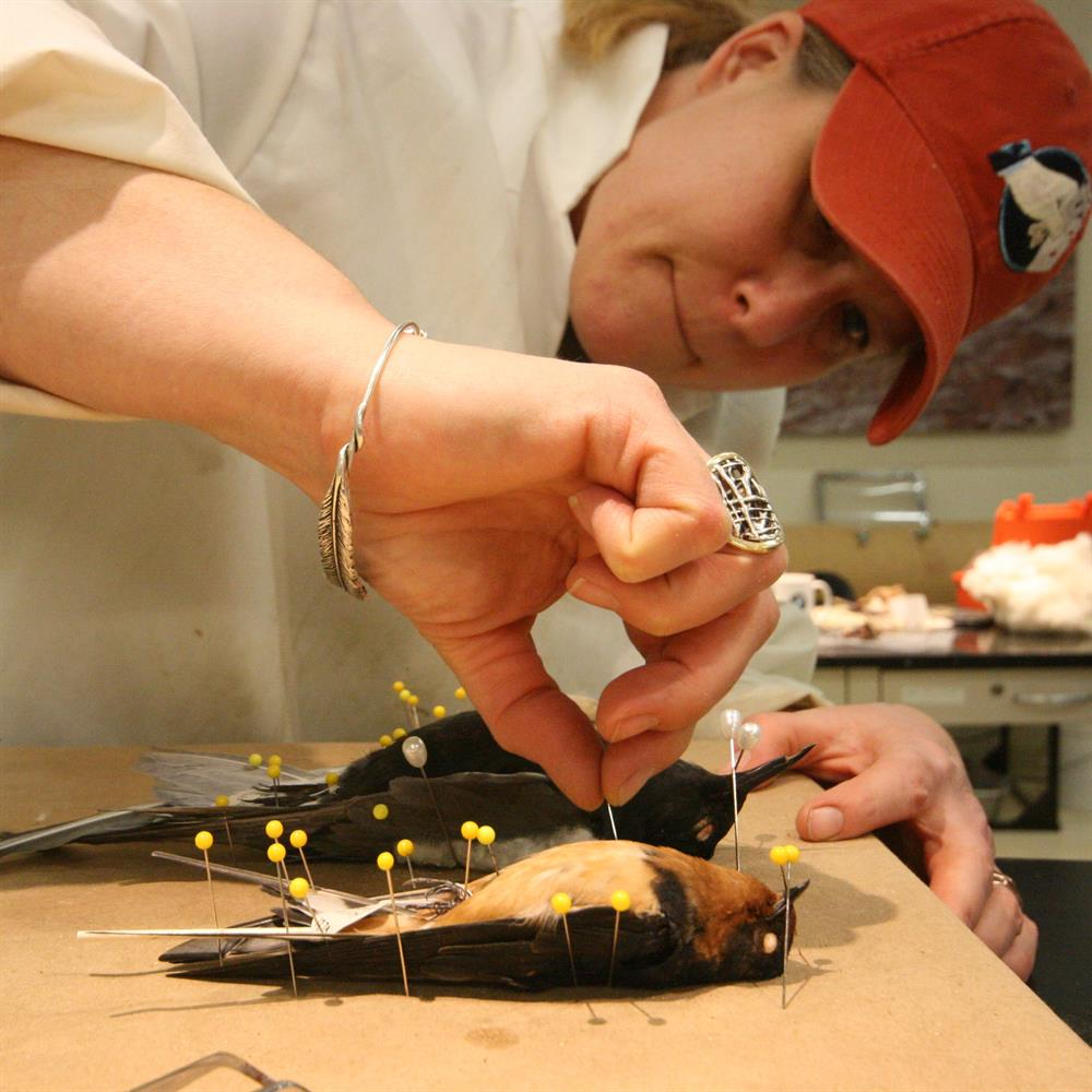 The Expert Is In: Live Demonstration: Bird Preparation