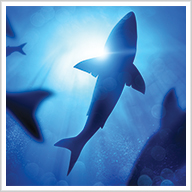 Sharks: Mysterious Guardians of the Ocean