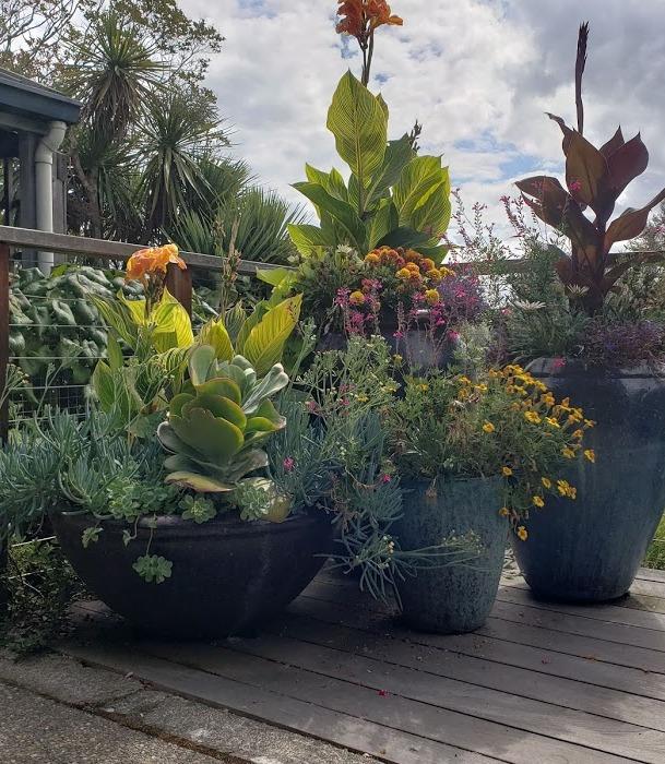 Urban Container Gardening (online)