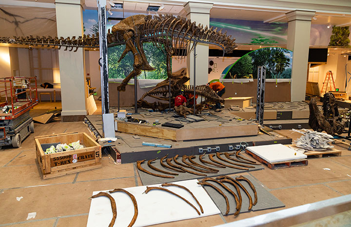 The Expert Is In: How Do You Build a Fossil Exhibit?