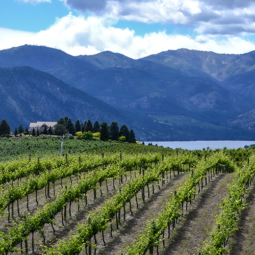 Washington-State Wines From Women Makers: A Top Sommelier's Guide
