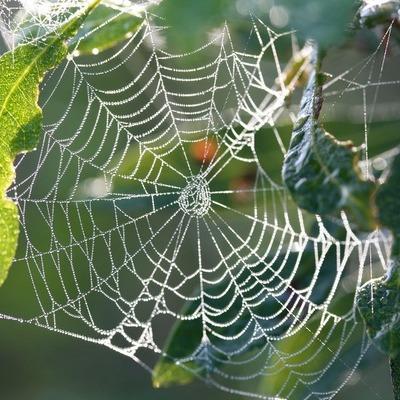 Webinar: Spider Silk