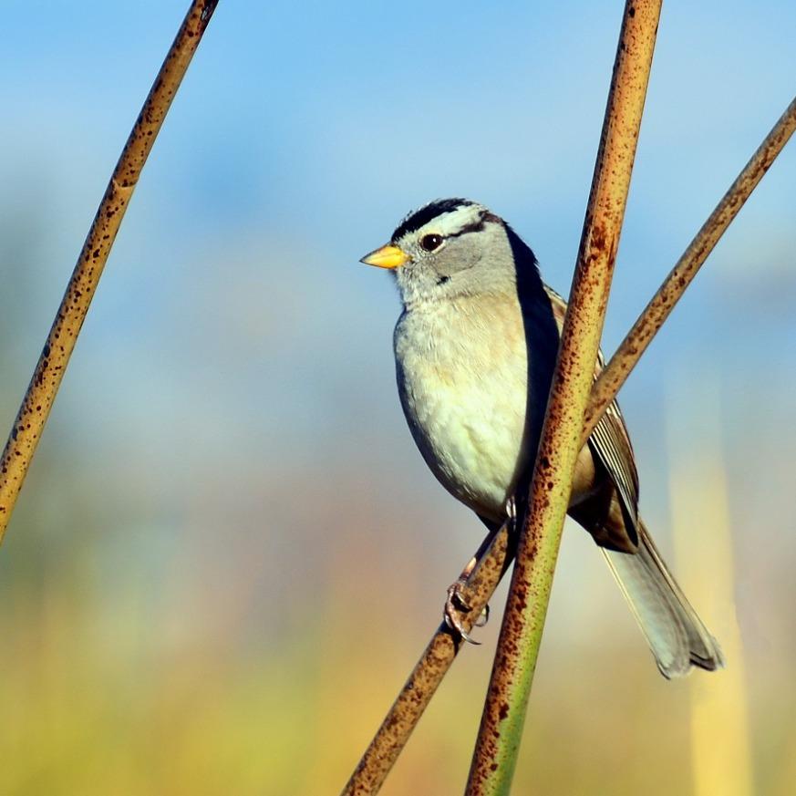 Birds of Abbotts Lagoon