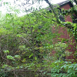 Pruning Series: Prune and Renovate the Overgrown Landscape (online)