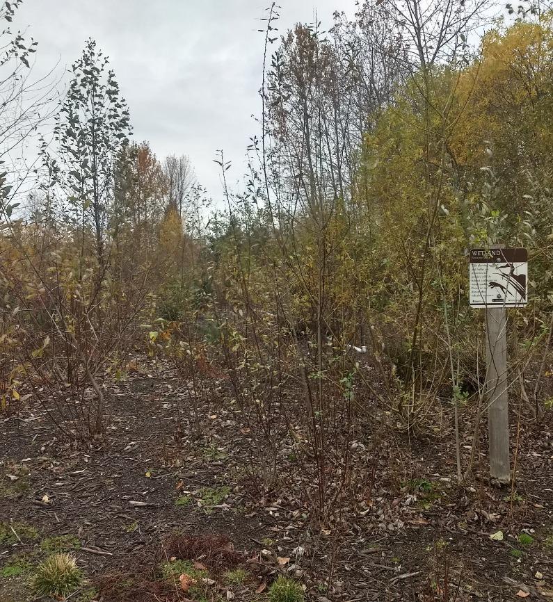 Covering Common Ground: Soil Management Plan Componants (online)