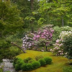 Pruning Series: Japanese Garden Pruning (online)