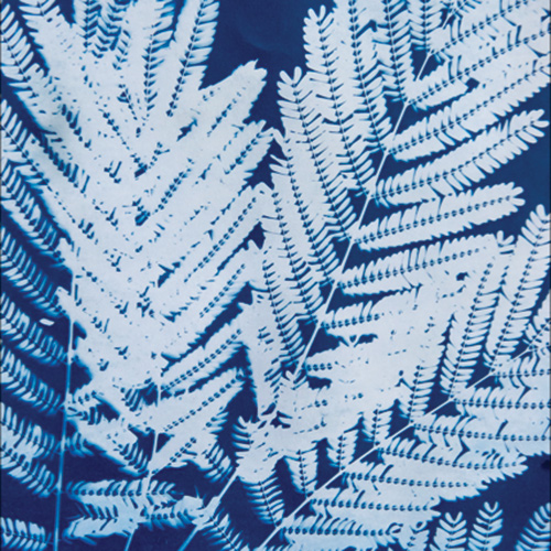 Photography: A Hands-on History of Cyanotypes
