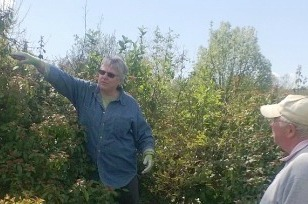 Summer Pruning of Trees and Shrubs