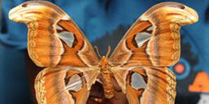 Bug-ology at the Bohart