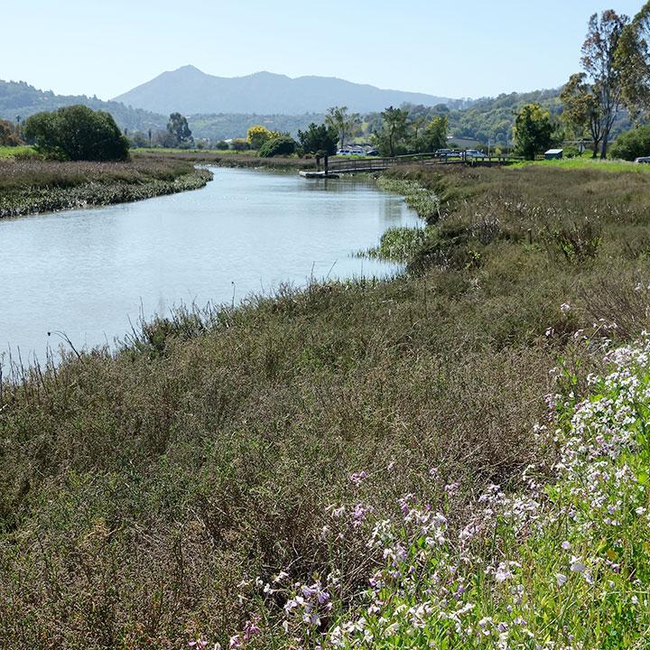 Restoring a Wetland