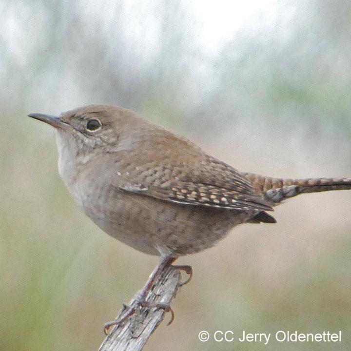 Birdsong Series III