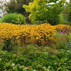 Gardening with the Seasons: Summer