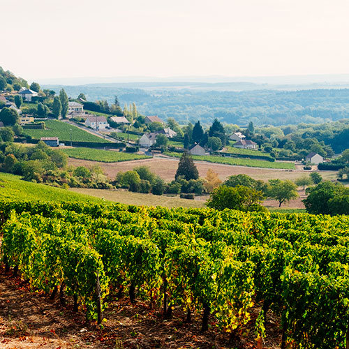 Loving the Loire