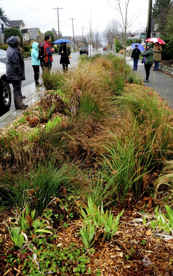 Rain Gardens and More (online)