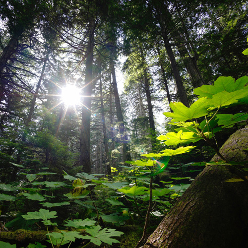 2020 Urban Natural Areas Seminar: Let's Talk About Plants