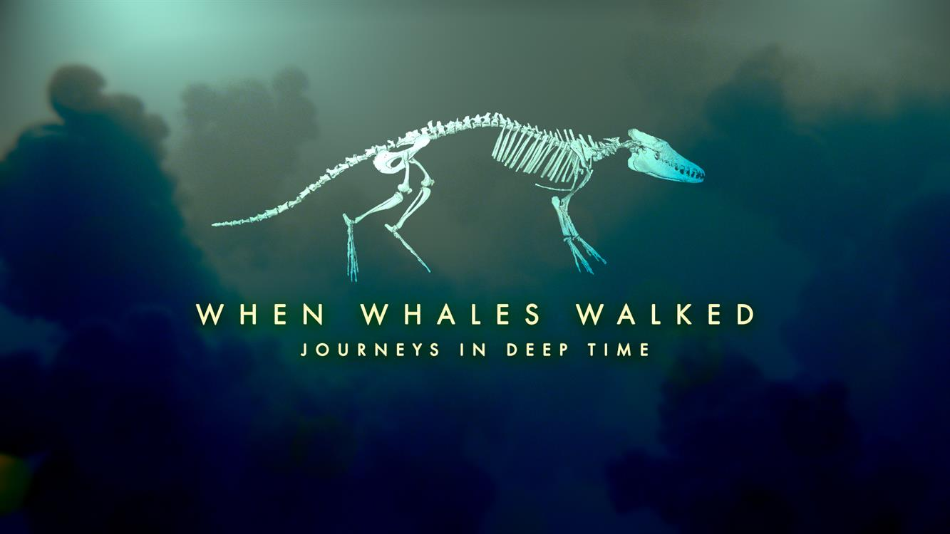 Natural History on the Big Screen: When Whales Walked