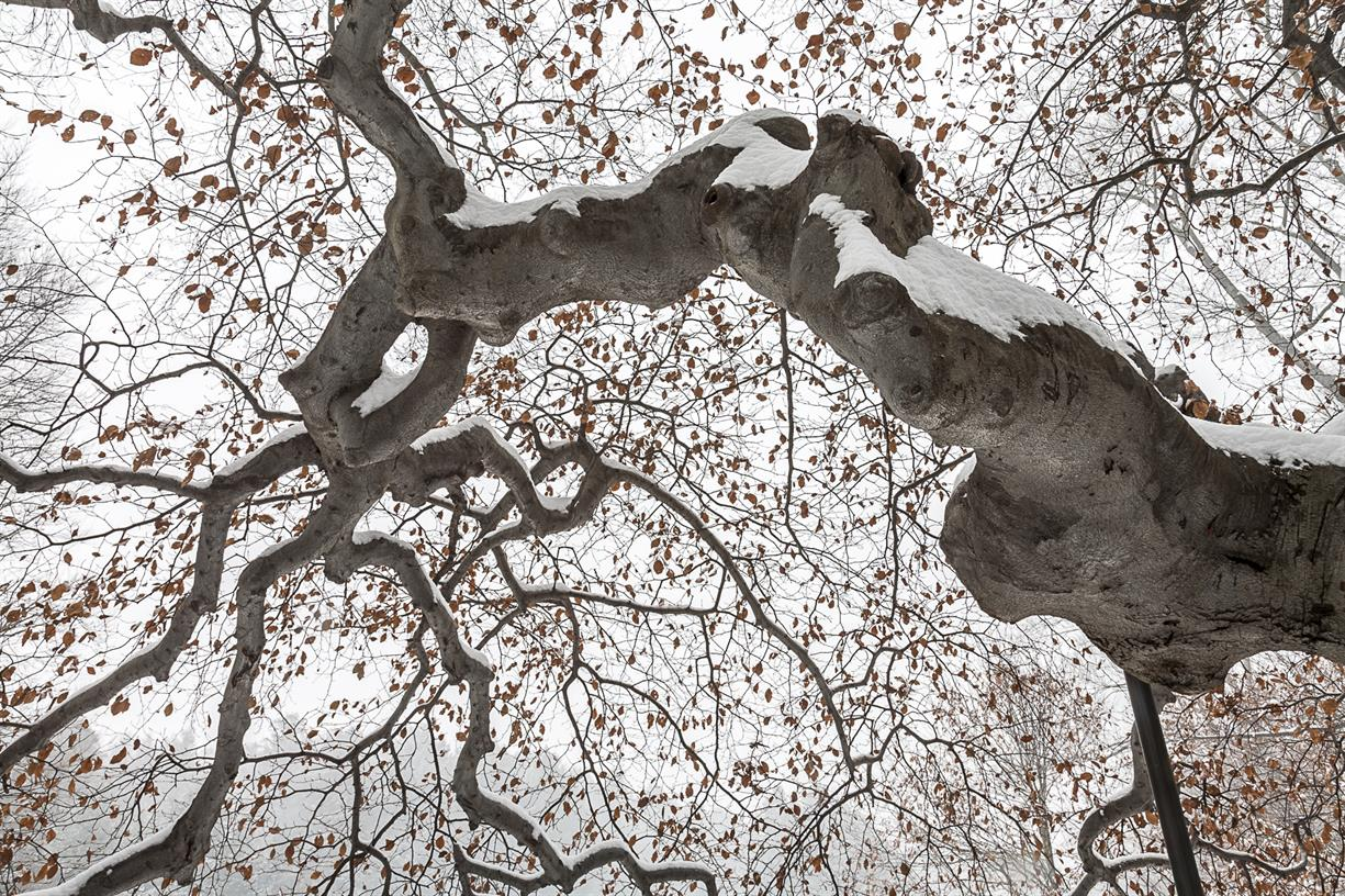 Transitions: Winter Into Spring Photographs of the Arnold Arboretum by Chris Morgan