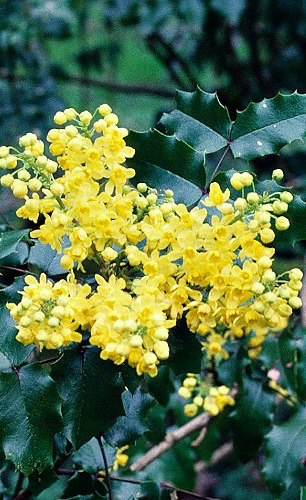 UW Botanic Gardens: Help Native Pollinators with Pollinator Pathways
