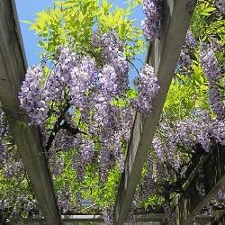 Master Pruner Series: Vine Pruning