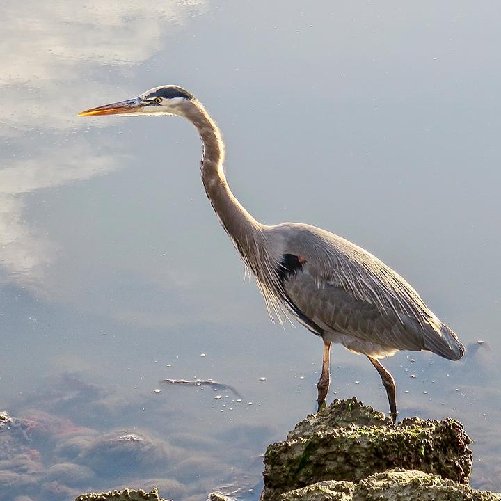 Senior Stroll: Birds of Hamilton