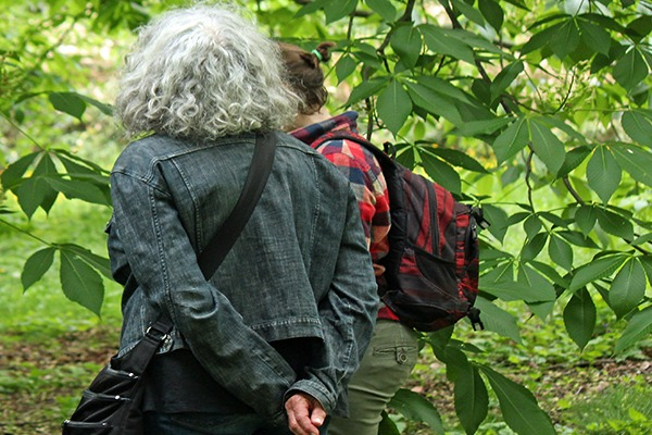 Deciduous Tree Identification